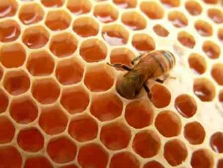 As propriedades antibacterianas de mel aceleram a cura das queimaduras