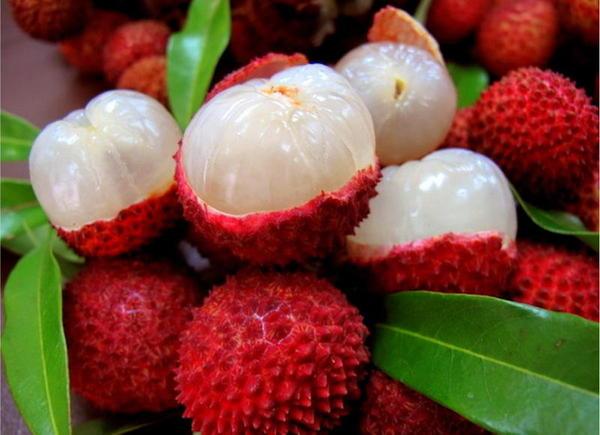 A lichia, fruta que tem causado uma epidemia de mortes infantis