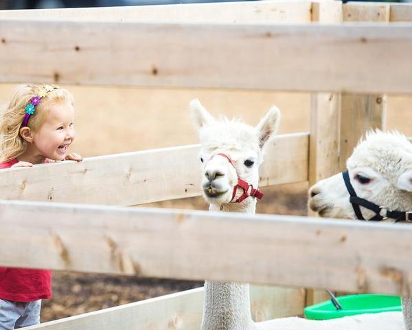 As crianças que cresceram em fazendas têm menos alergias