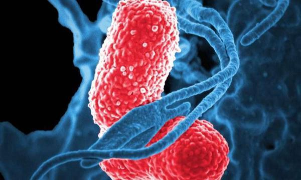 Assim invade o corpo, a bactéria que causa a pneumonia