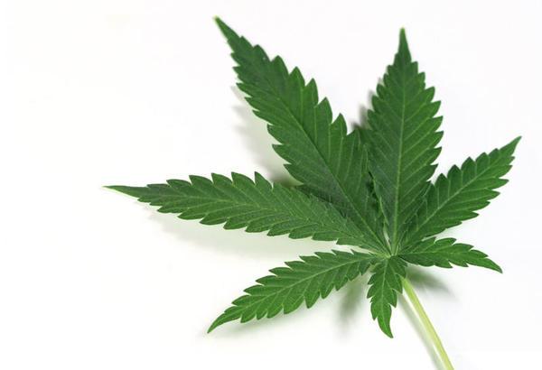 Cannabis contra epilepsia