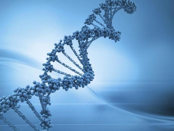 Como pode o DNA sintético substituir o DNA natural?