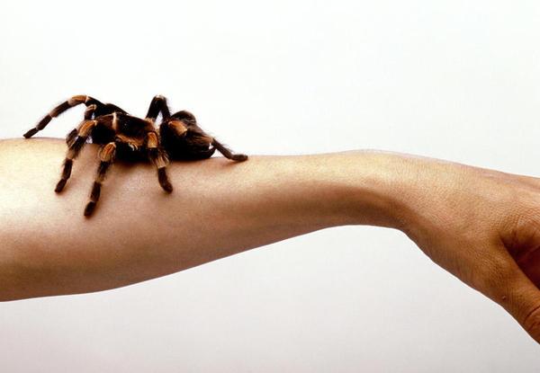 Como superar as fobias
