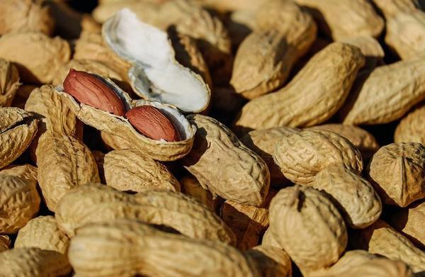 Conseguem curar a alergia ao amendoim