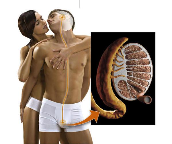 Contraceptivos masculinos