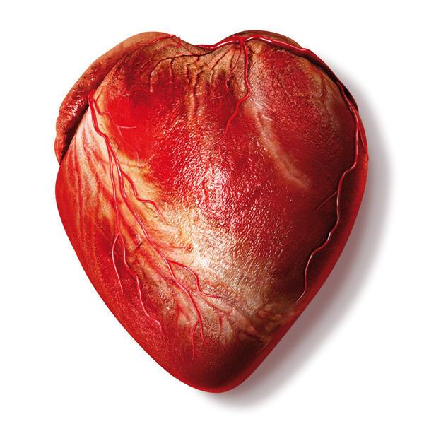 Coração bioartificial