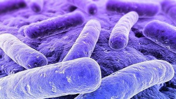 Devemos ter medo de esta bactéria?