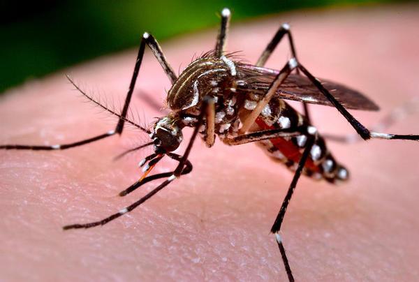 Google e seu exército de mosquitos para combater o Zika