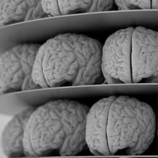Nasce o primeiro banco mundial de tecidos cerebrais