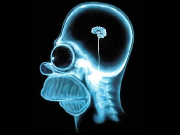 Nosso cérebro diminui