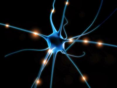 Um novo estudo realizado por espanhóis tem feito crescer os axônios lesados de neurônios de rato.
