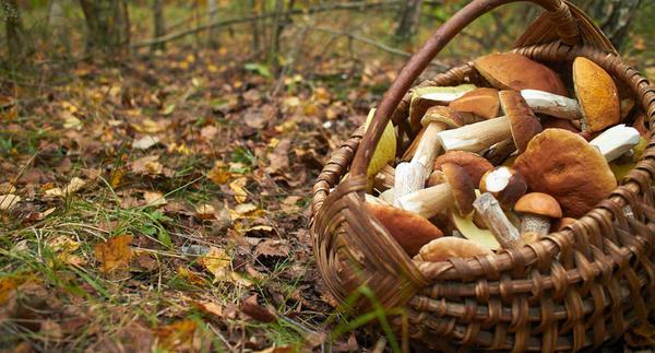 Qual é a melhor forma de preparar os cogumelos?